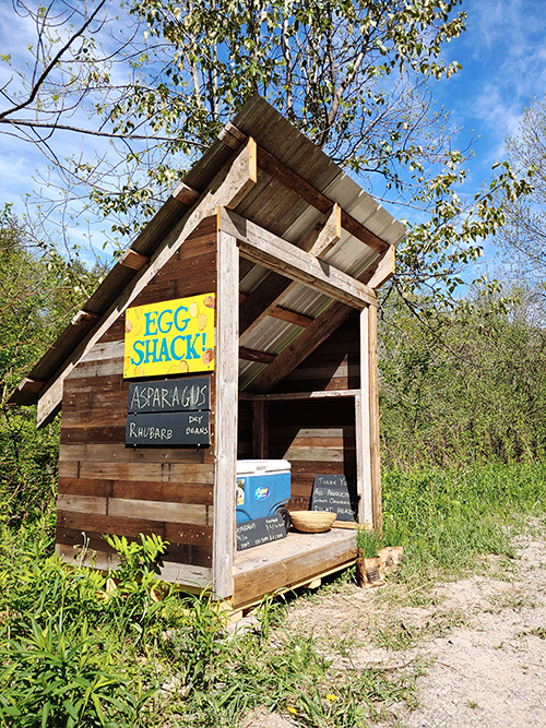 Egg shack - great place to buy local eggs during pandemic