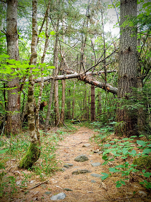 A trail through our local woods - great place to spend time during pandemic